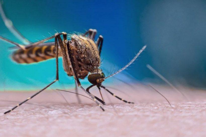 Dengue em Navegantes
