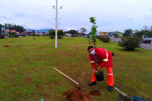 Navegantes promove ações de arborização para uma cidade com responsabilidade ambiental
